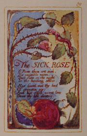 the blossom and the sick rose Merry merry sparrow under leaves so green a happy blossom sees you swift as arrow seek your cradle the blossom by william blake the sick rose the book of.