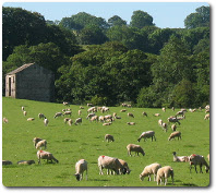 Sheep farming, photo by Stephen Craven, available through Creative Commons